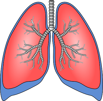 Lesson for kids study. Lungs clipart bronchitis
