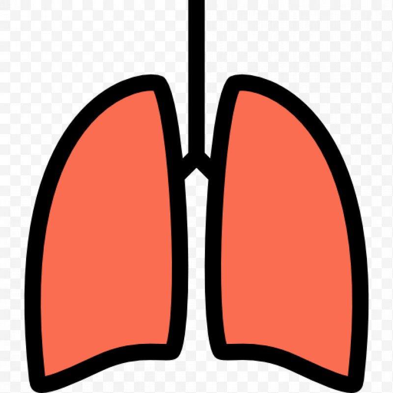 Lung png x px. Lungs clipart cartoon