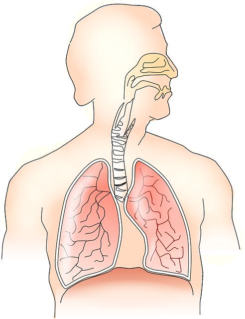 Lungs clipart chronic bronchitis. Copd rehab classes lita