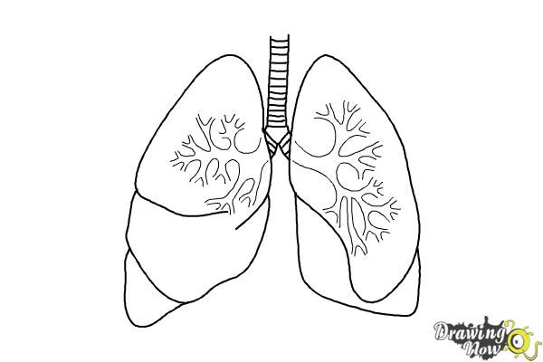 Lungs clipart coloring page. Sheet image