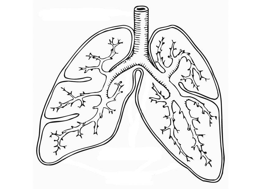 Lungs clipart coloring page. Worksheet respiratory system
