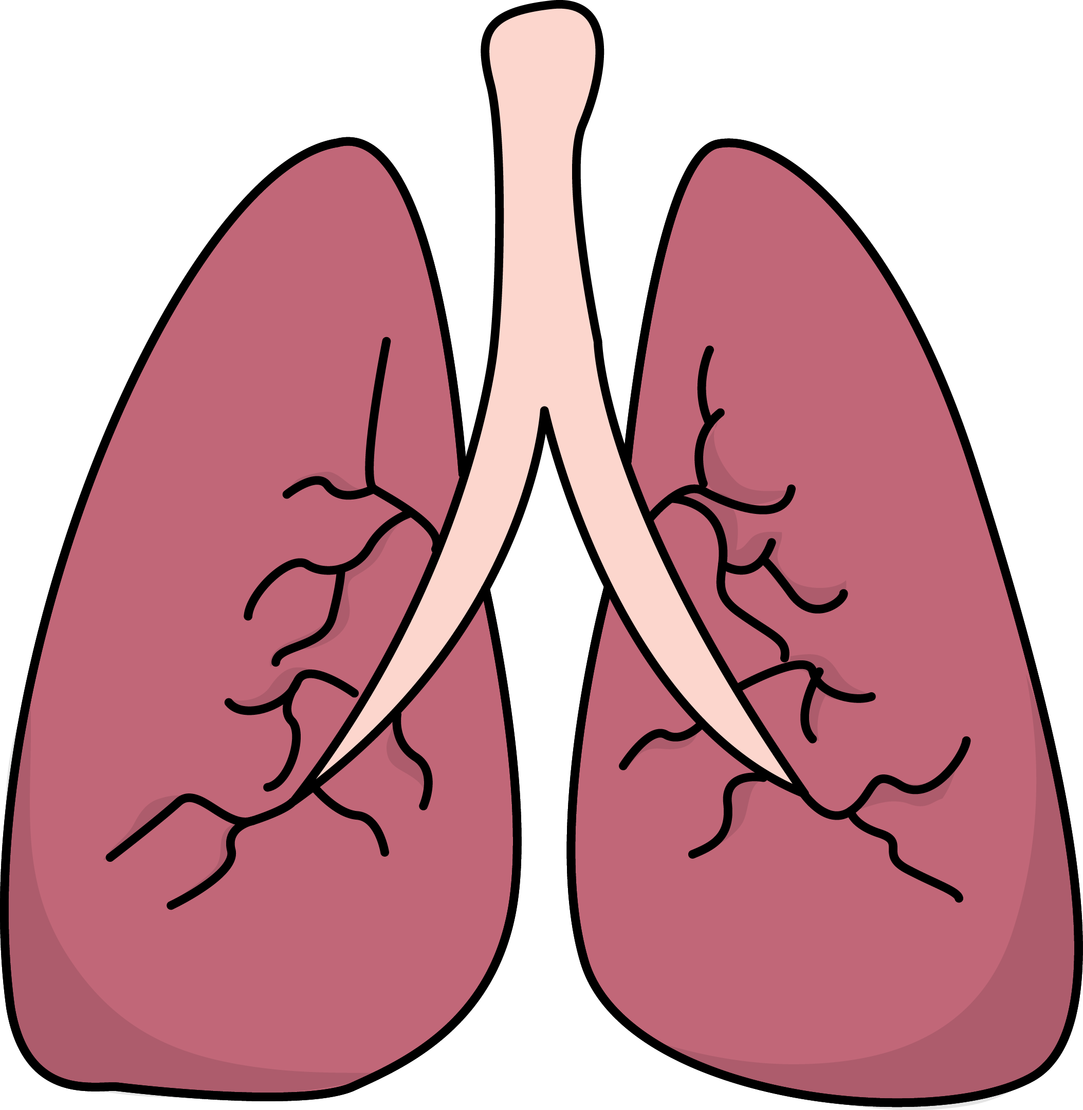 Lungs clipart frog. Image for free health