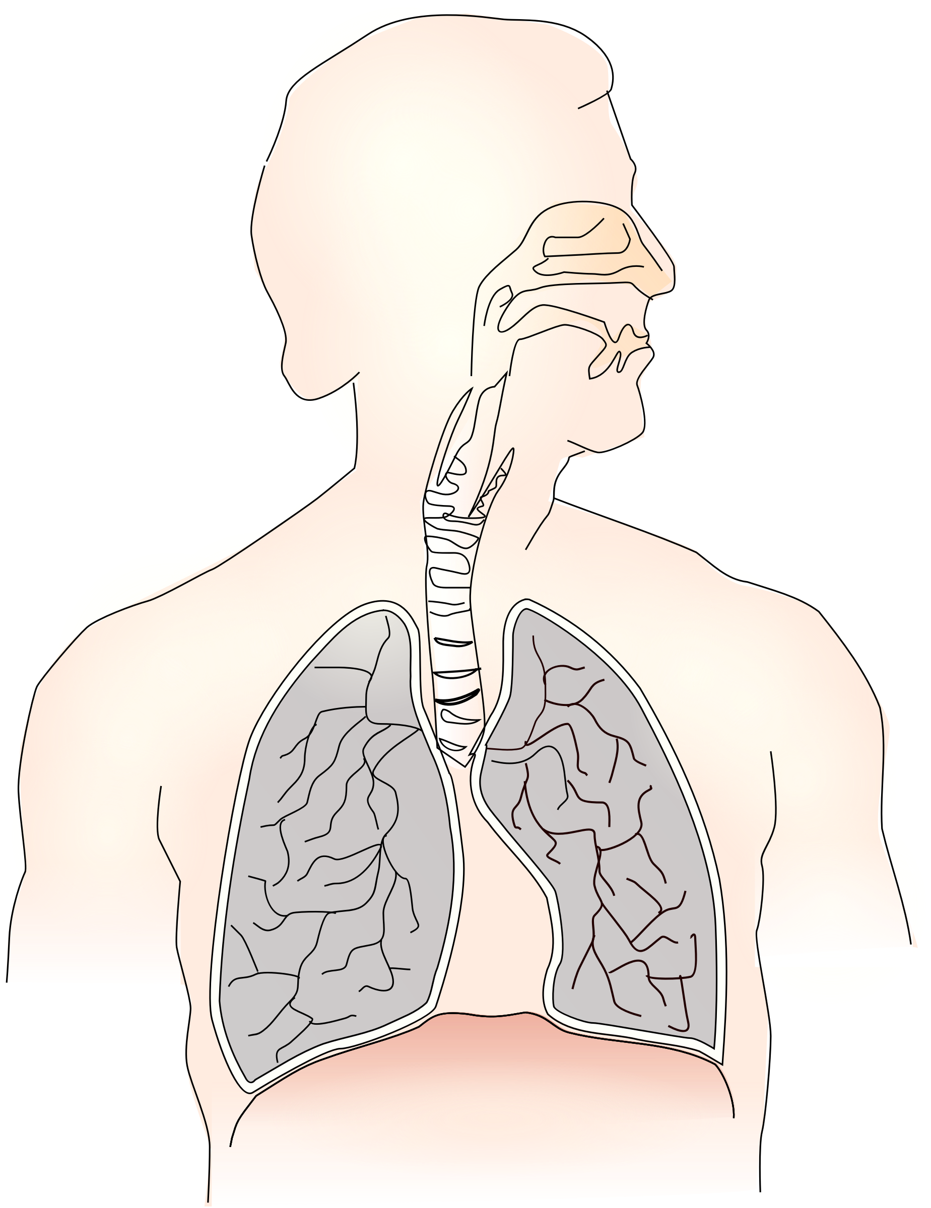 Lungs windpipe mouth remix. Nose clipart respiratory system