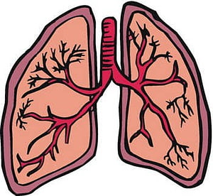 Cancer png images free. Lungs clipart human lung