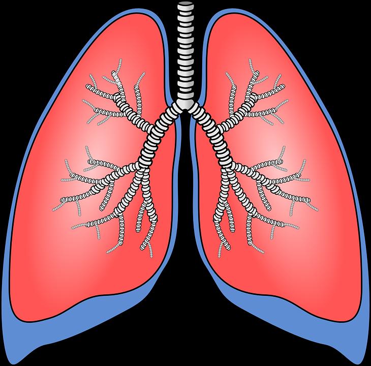 internal server error. Lungs clipart human lung