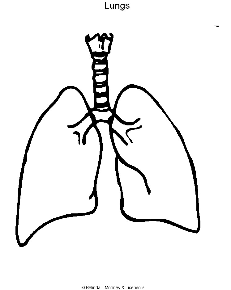 Lungs clipart lung diagram. Download coloring page book