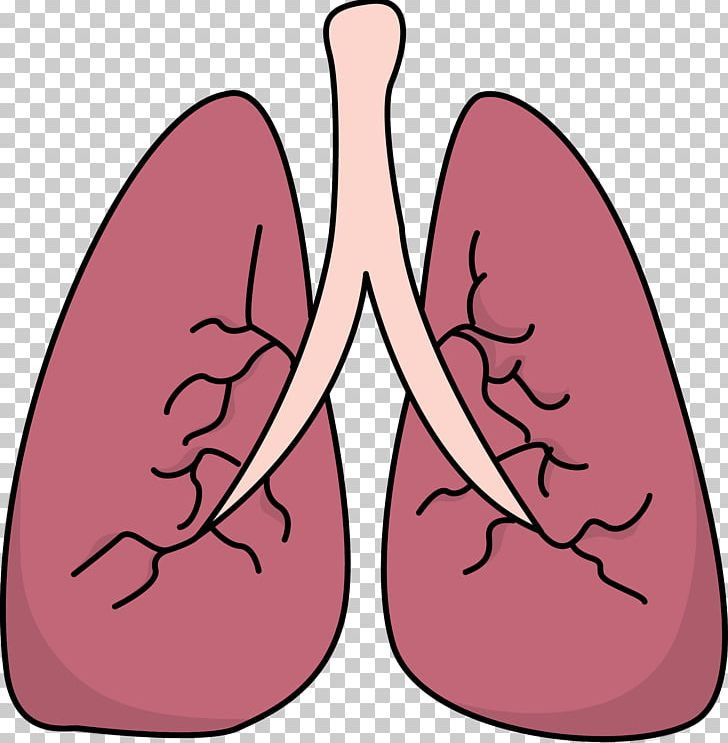 Png arm breathing bronchus. Lungs clipart lung diagram