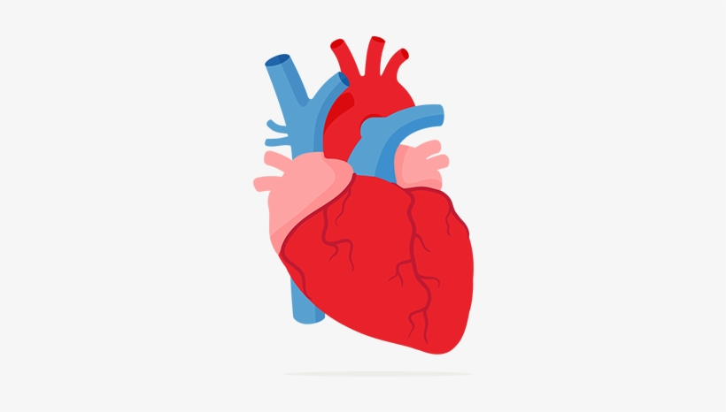 Image and your free. Lungs clipart lung heart