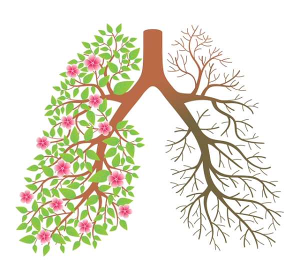 Smoking cessation tobacco clip. Lungs clipart lung smoker