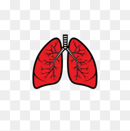 Lungs clipart lung smoker. Red png i images