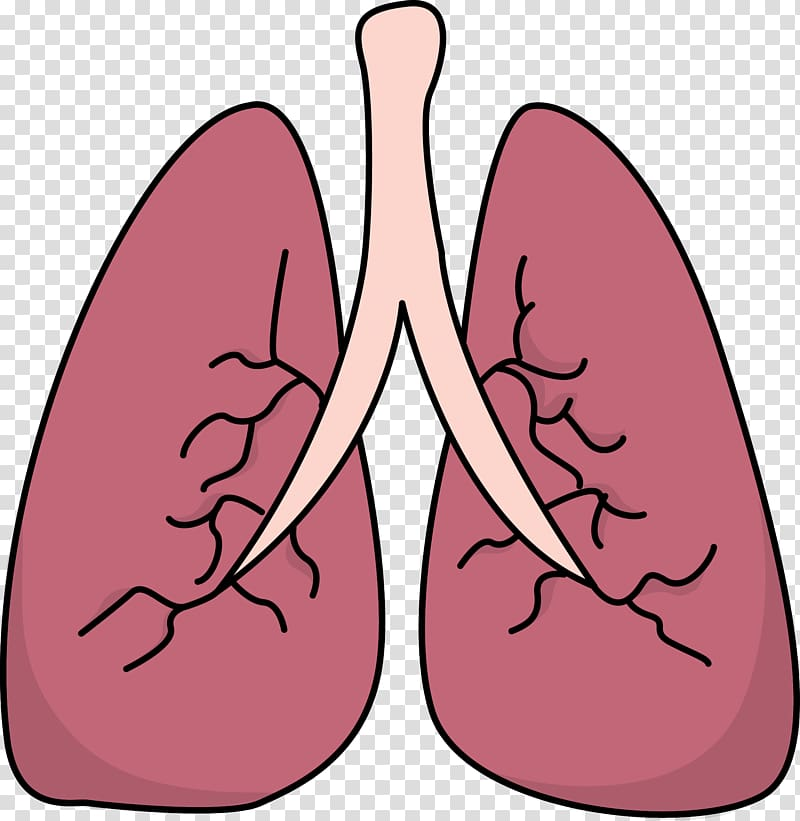 Lungs clipart pink. Lung small transparent background