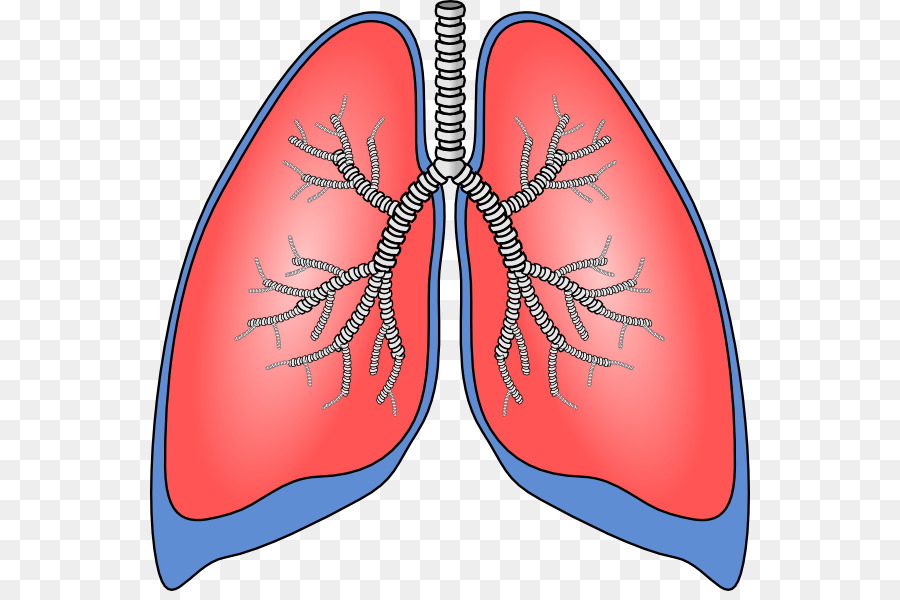 Lungs clipart respiration. Lung chronic obstructive pulmonary
