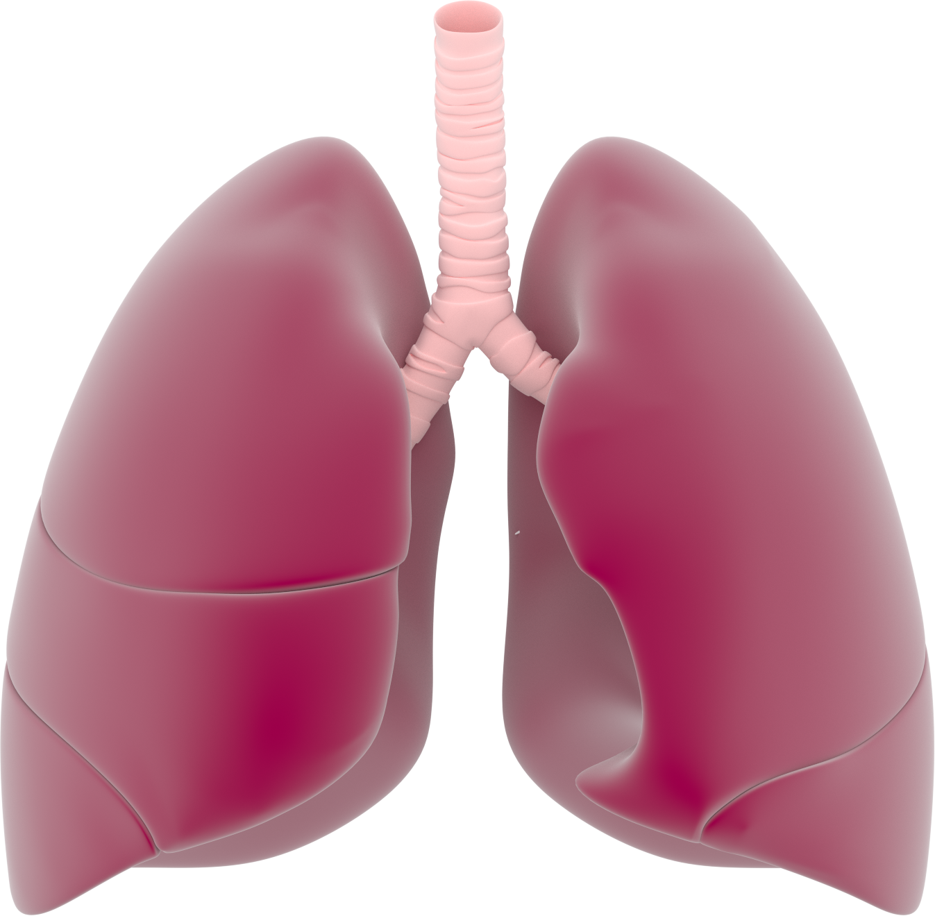 Presentation name on emaze. Lungs clipart respiration