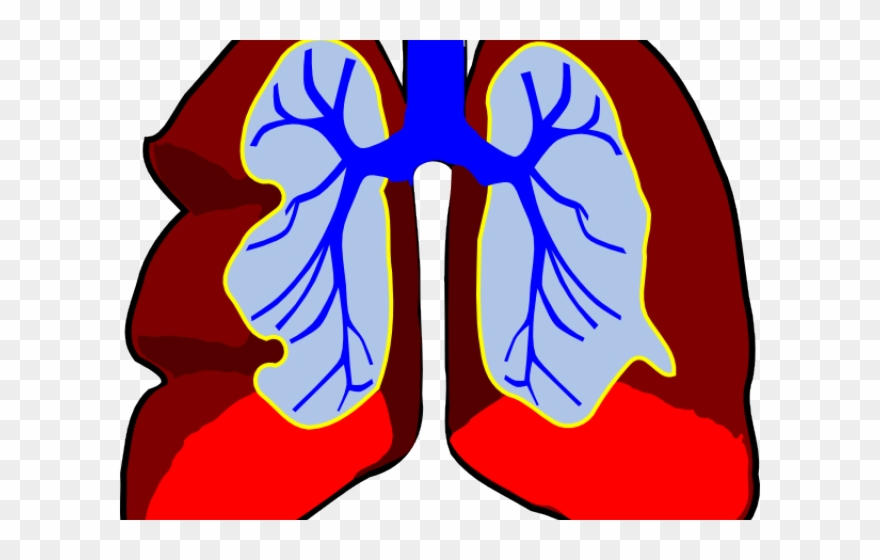 Lung clip art png. Lungs clipart sick