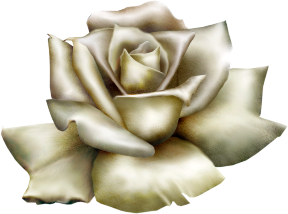 Beautiful gallery yopriceville high. White clipart rose