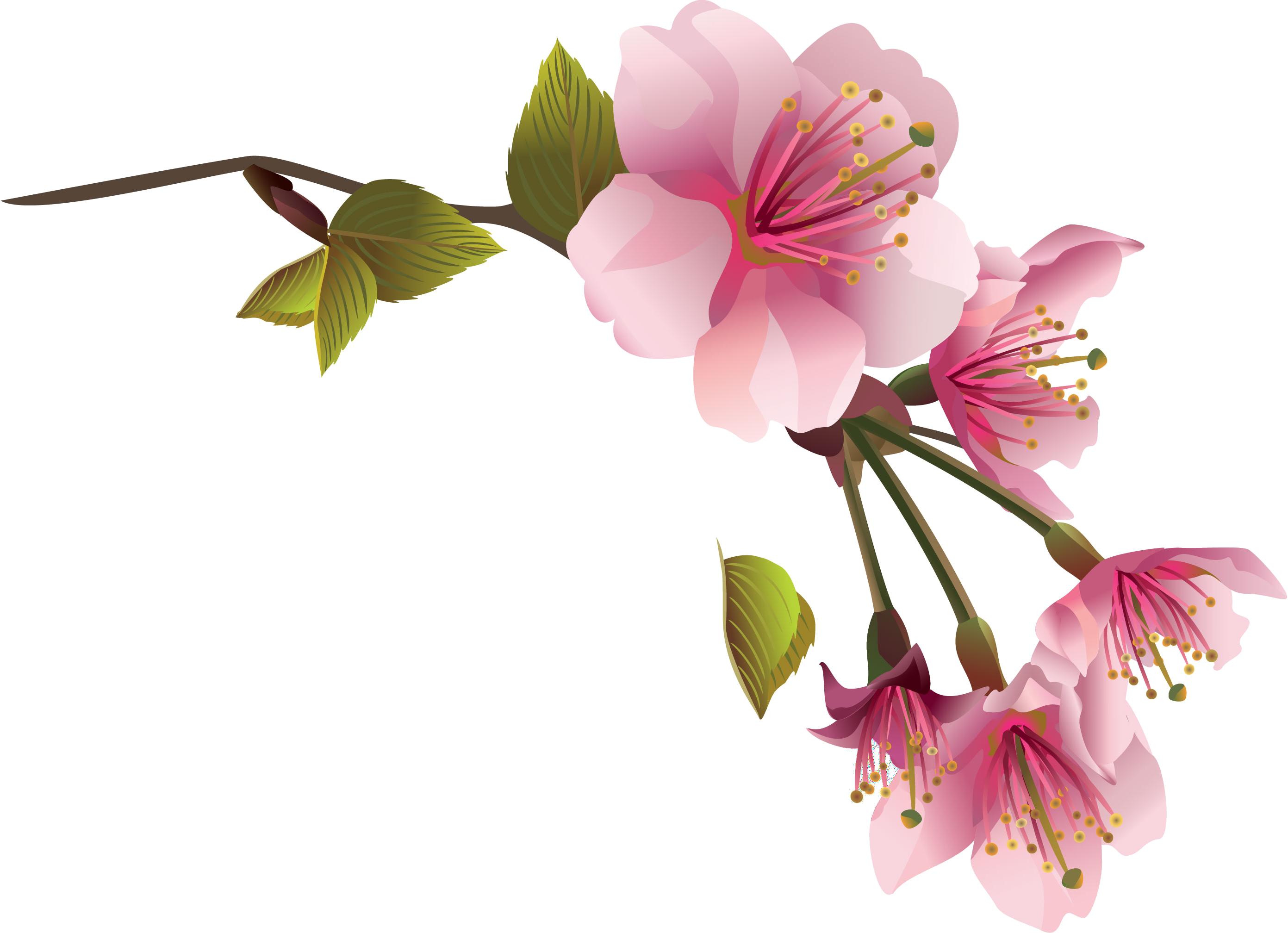 Magnolia Clipart Branch Magnolia Branch Transparent Free