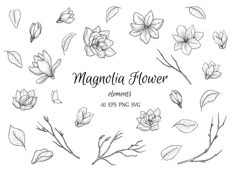 Magnolia clipart drawn. Botanical hand floral element