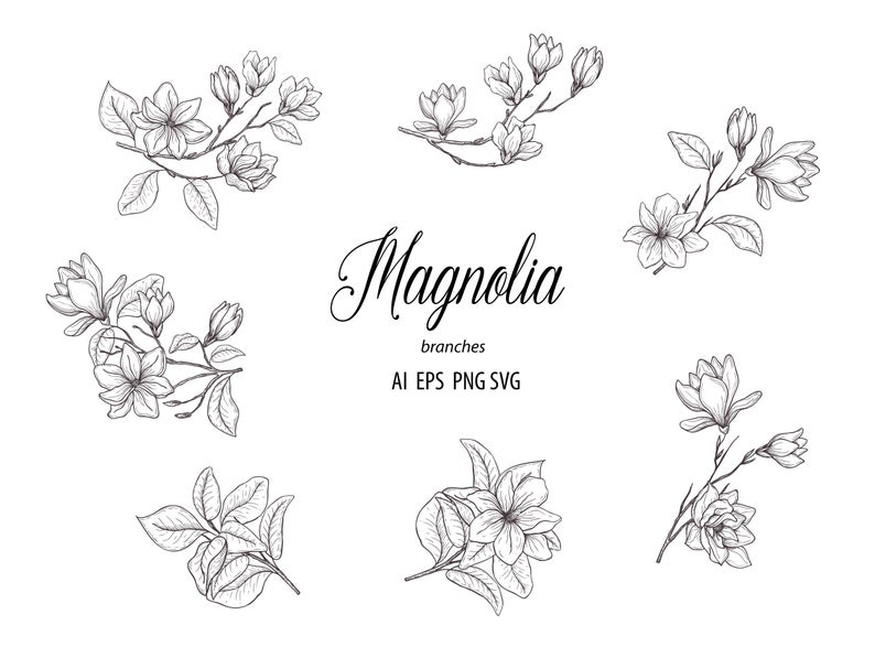 Botanical hand floral branches. Magnolia clipart drawn