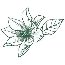 Magnolia clipart drawn. Flower drawing free download