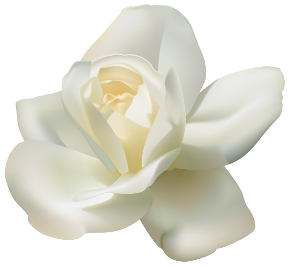 White clipart rose. Beautiful png image gallery