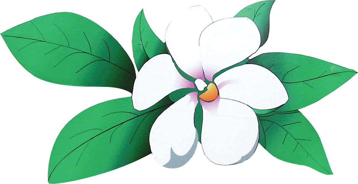 Login the magnolias of. Magnolia clipart magnolia leaf