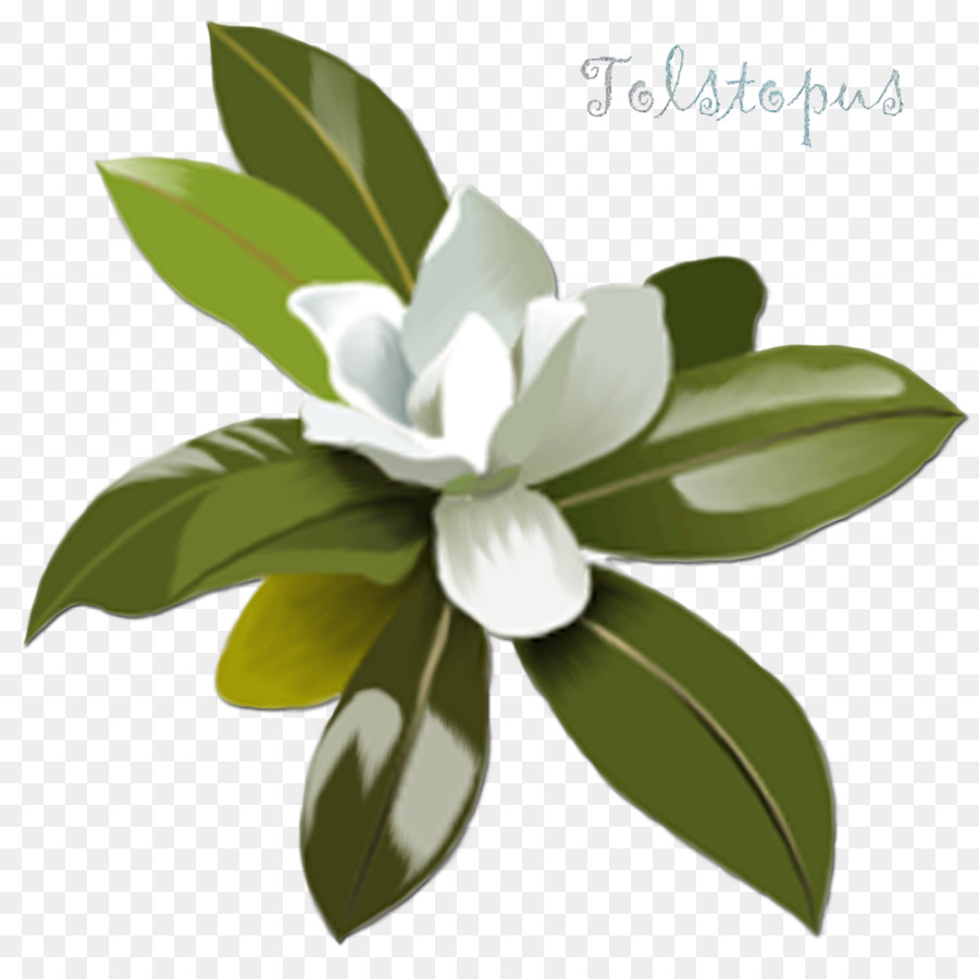 Magnolia clipart magnolia leaf. Flower png download free
