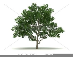 Of free images at. Magnolia clipart magnolia tree