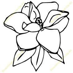 Magnolia clipart magnolia tree.  best art reference