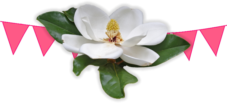 Magnolia flower png. Lagniappe southern celebrations magazine