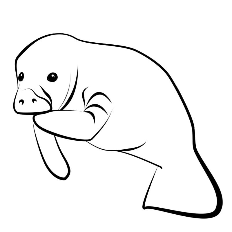 Manatee Clipart Black And White - Vector And Clip Art Inspiration •