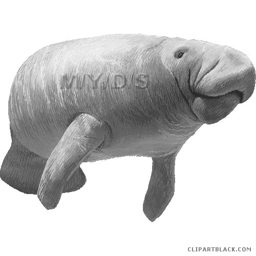 Clipartblack com animal free. Manatee clipart