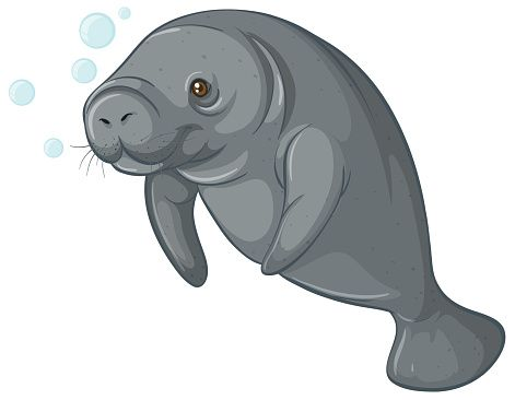 Manatee clipart. The best clip art