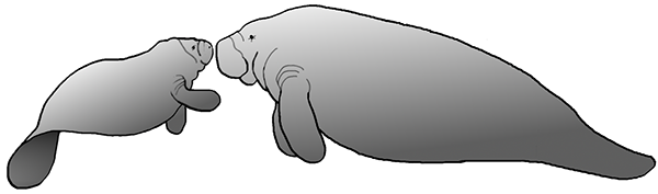 On behance . Manatee clipart