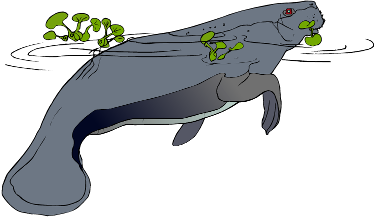 Manatee clipart baby manatee. Free in water