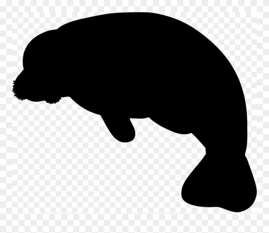 Manatee clipart baby manatee. Sea cows indian elephant