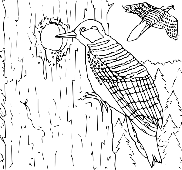 Coloring Book Woodpecker Clip Art at Clker.com - vector clip art ...