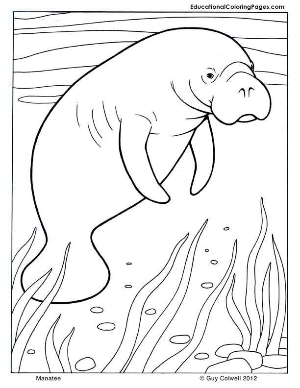 Manatee clipart coloring page. Mammals pages teaching animal