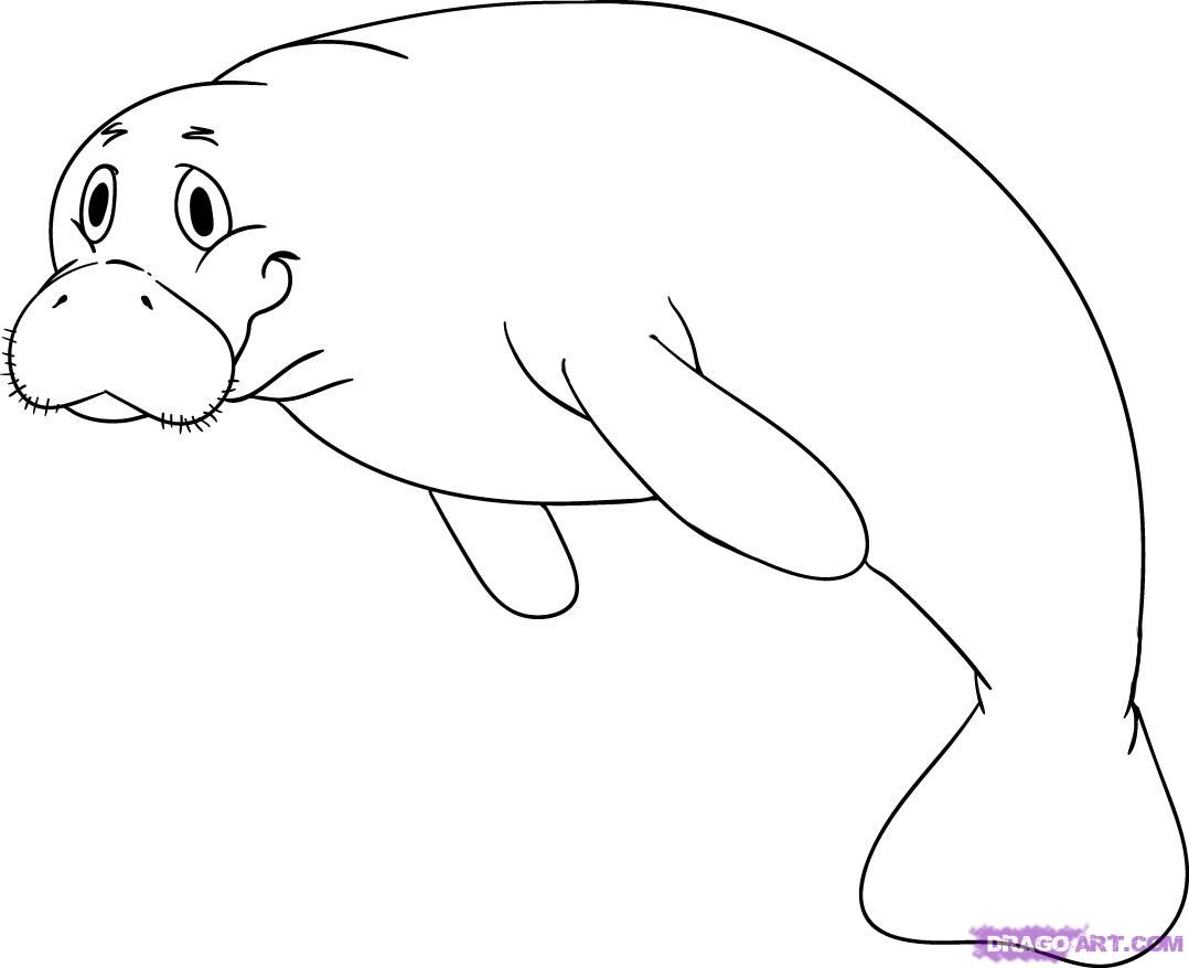 How to draw a. Manatee clipart coloring page