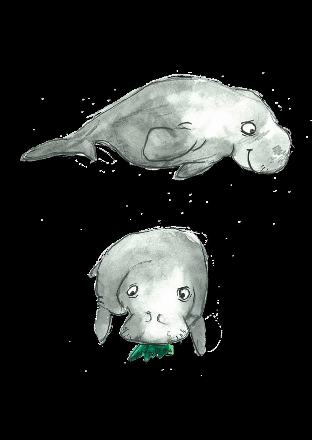 Manatee clipart dugong. Animal alphabet adventure pt