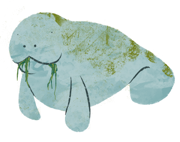 Manatee clipart dugong. Katherine s sketch blog
