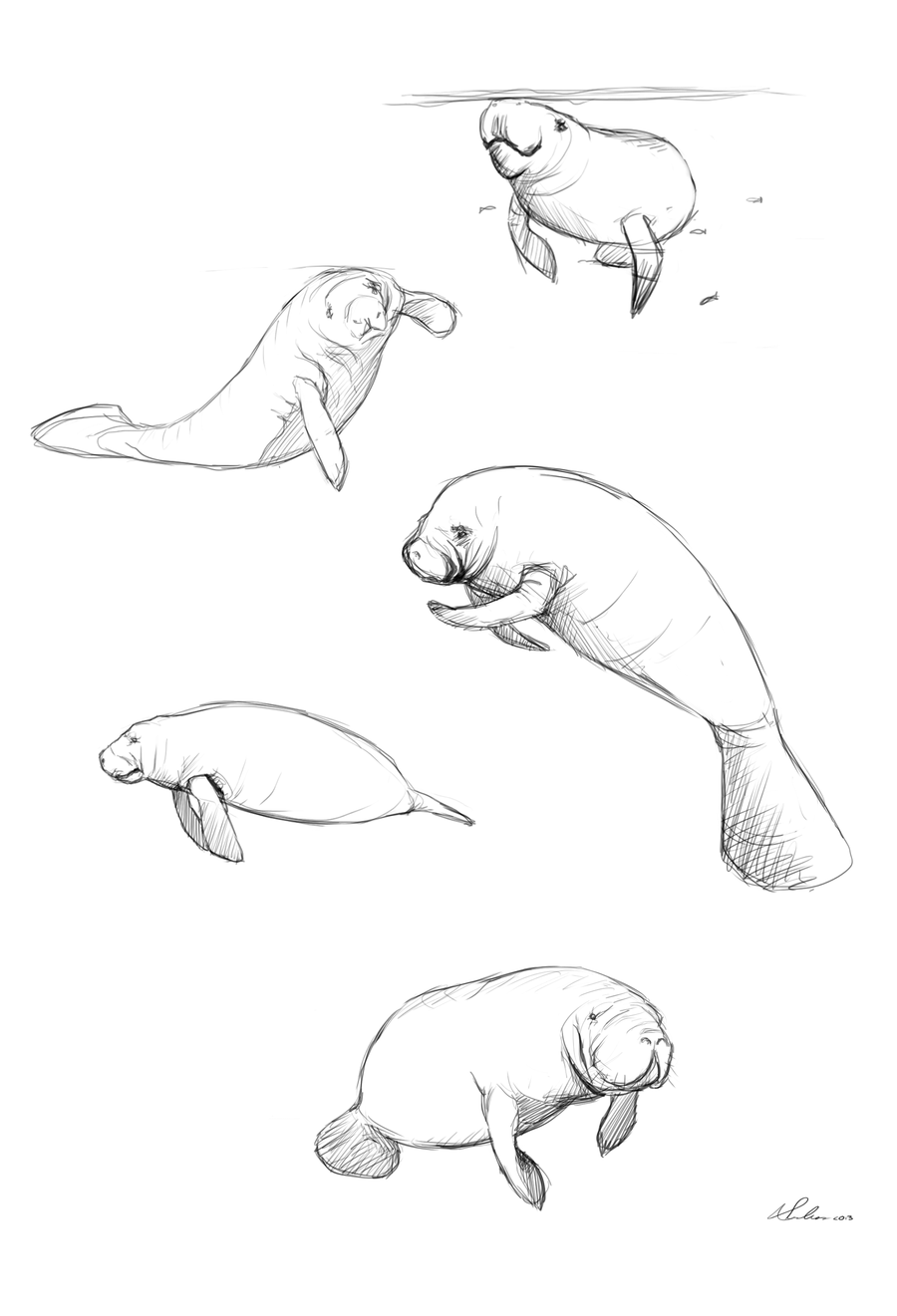 Manatee clipart simple. Pin by carol caryl