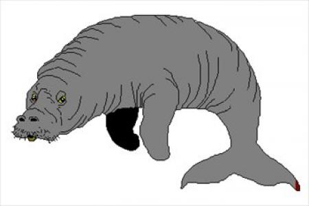 Free download on webstockreview. Manatee clipart simple