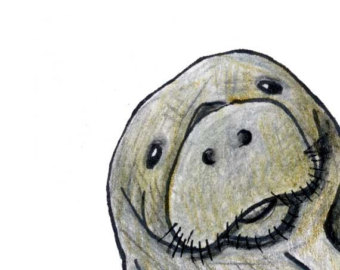 Clip art wikiclipart . Manatee clipart sketch