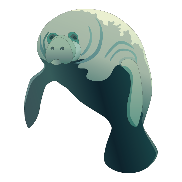 Manatee clipart vector. It s manateeappreciationday show