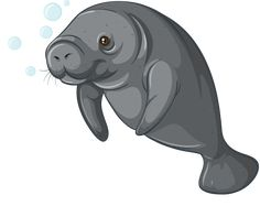 Manatee clipart. Image result for illustrations