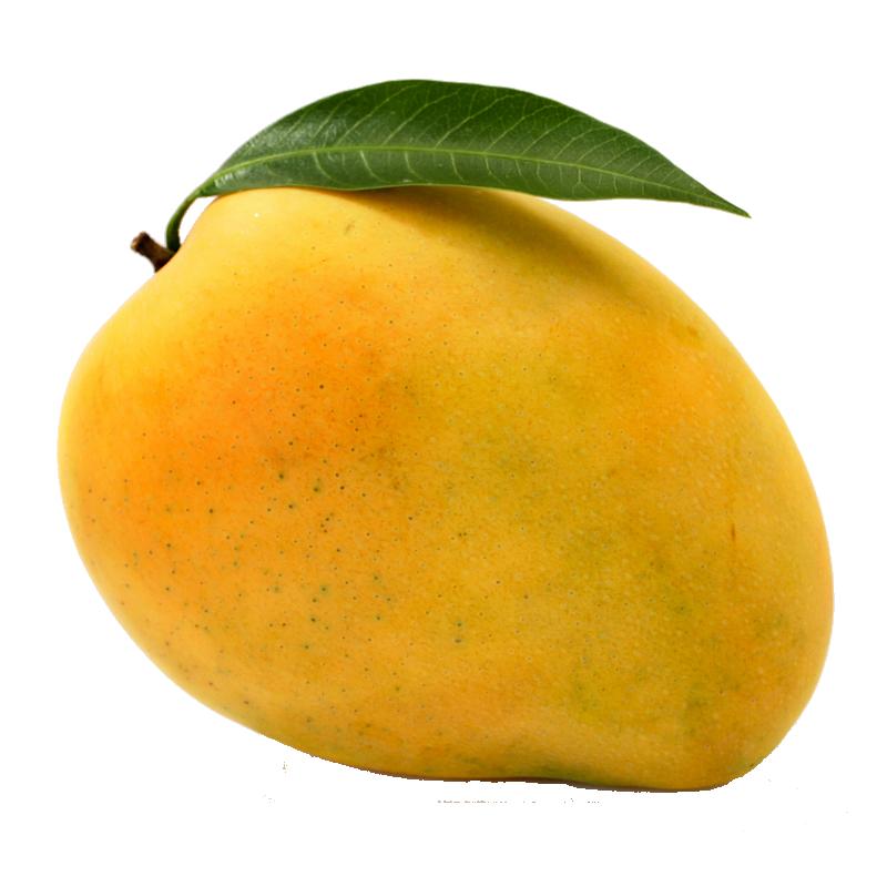 Ripzon food beverages quality. Mango clipart mango slice