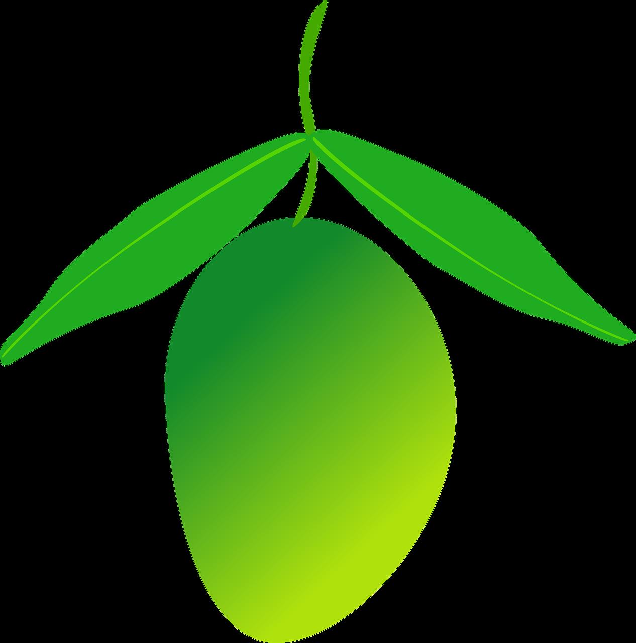 Fruit green transprent png. Mango clipart unripe mango