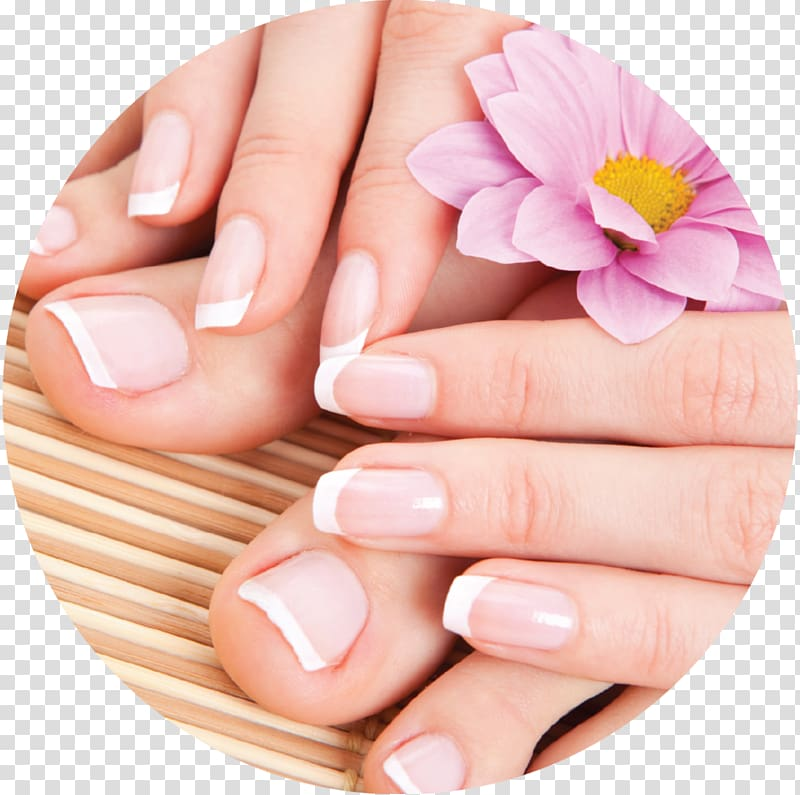 Nails clipart french manicure. Pink gerbera flower and
