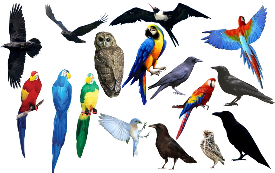 Png format images. Bird by chimonk on