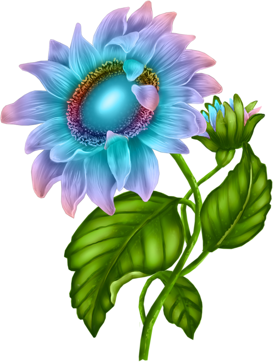Margarita clipart watercolor. Flowers flores bloemen png